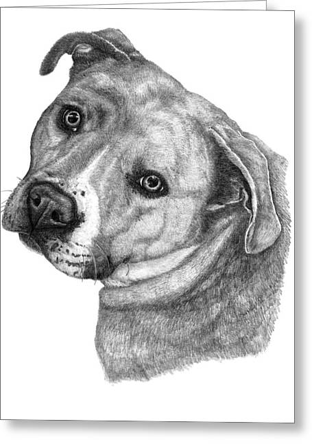 Rescue Drawings Greeting Cards - Adopt Love Greeting Card by Deanna Maxwell