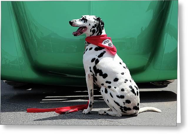 Good Dog Greeting Cards - Adopt Me Greeting Card by Toni Hopper