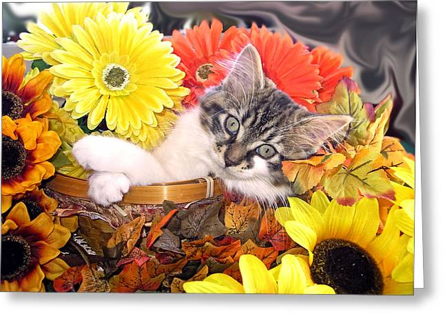 Best Friend Greeting Cards - Adorable Baby Cat - Cool Kitten Chilling in a Flower Basket - Thanksgiving Kitty with Paws Crossed Greeting Card by Chantal PhotoPix