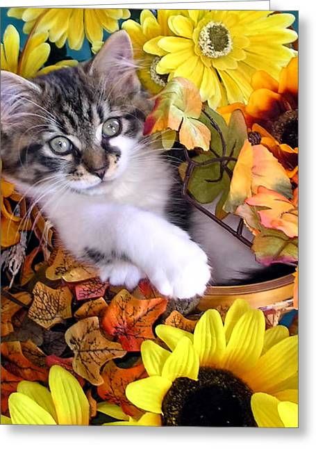 Kitten Greeting Cards - Adorable Kitten with Large Eyes Chilling in a Sunflower Basket - Kitty Cat with Paws Crossed Greeting Card by Chantal PhotoPix