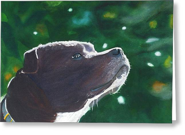 Staffordshire Bull Terrier Greeting Cards - Adoration Greeting Card by Ally Benbrook