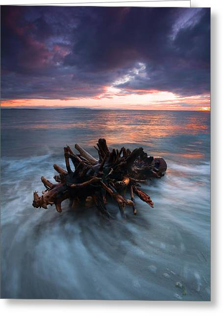 Stump Greeting Cards - Adrift Greeting Card by Mike  Dawson