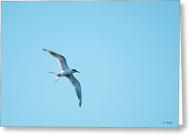 Wildlife Genre Greeting Cards - Adult Forsters Tern In Molt Greeting Card by Roena King