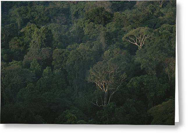 Forests And Forestry Greeting Cards - Aerial View Of A Rainforest Greeting Card by Stephen Alvarez