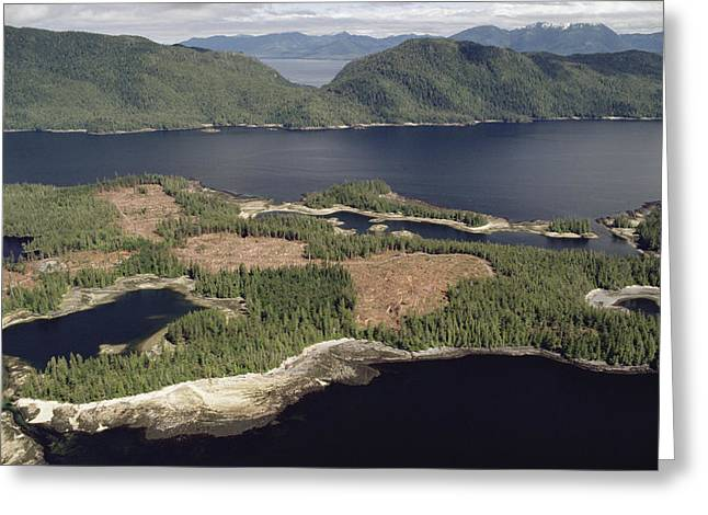 Clear Cut Greeting Cards - Aerial View Of Clearcut Temperate Greeting Card by Gerry Ellis