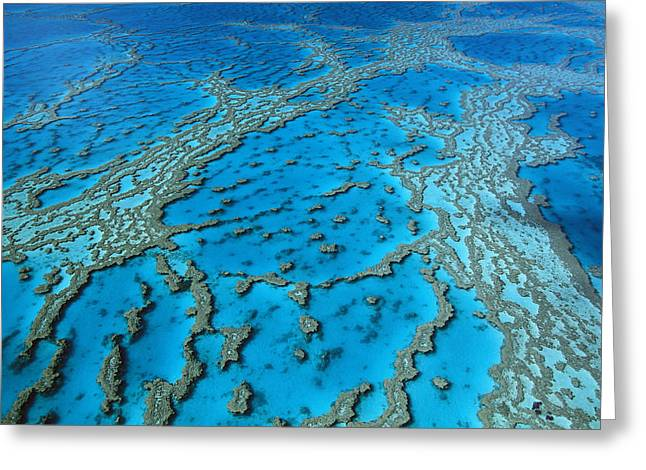 Ai Greeting Cards - Aerial View Of Coral Formations Greeting Card by Jean-Paul Ferrero