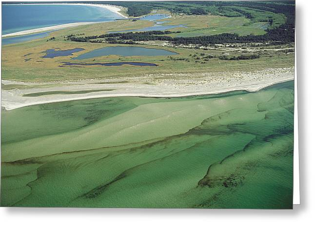Park Scene Greeting Cards - Aerial View Of Shoreline And Adjacent Greeting Card by Norbert Rosing
