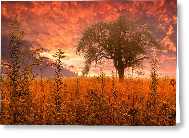 High Park Fire Greeting Cards - Aflame Greeting Card by Debra and Dave Vanderlaan