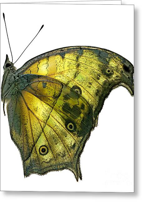 Unique View Greeting Cards - African Butterfly - Salamis Parhassus  Greeting Card by Janeen Wassink Searles