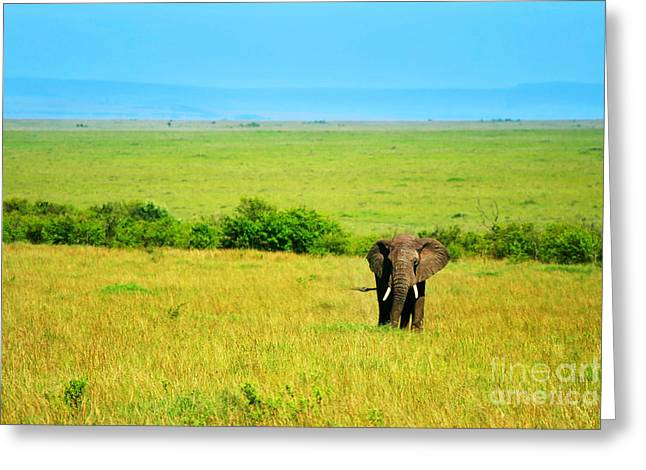 Park Scene Greeting Cards - African Elephant in the wild Greeting Card by Anna Omelchenko