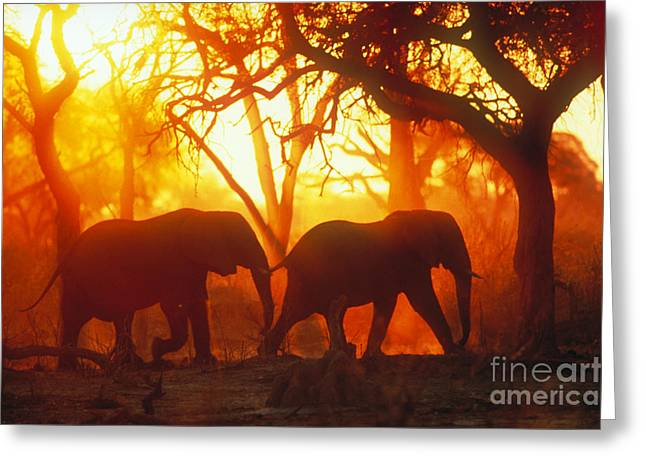 Protected Species Greeting Cards - African Elephants Greeting Card by Gregory G. Dimijian