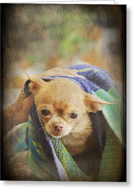Canine Digital Art Greeting Cards - After The Bath Greeting Card by Laurie Search