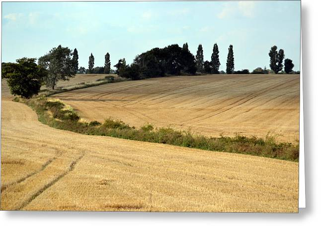 Cornfield Greeting Cards - After The Harvest. Greeting Card by Terence Davis