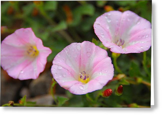 Plantlife Greeting Cards - After the rain Greeting Card by Anthony Citro