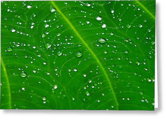 After The Rain Greeting Card by Michael Krahl