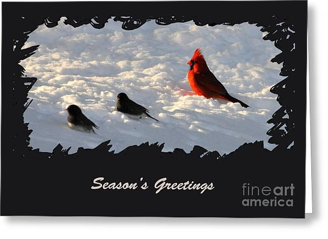 Cardinals. Wildlife. Nature. Photography Greeting Cards - AFTER THE STORM - Seasons Greetings Greeting Card by Gerlinde Keating - Keating Associates Inc