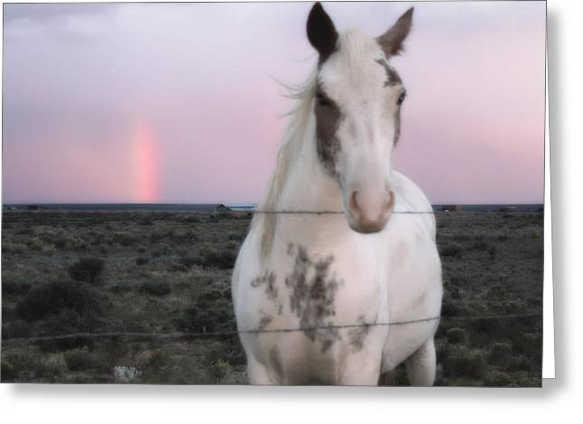 Dude Ranch Greeting Cards - After the Storm Greeting Card by Heidi Hermes