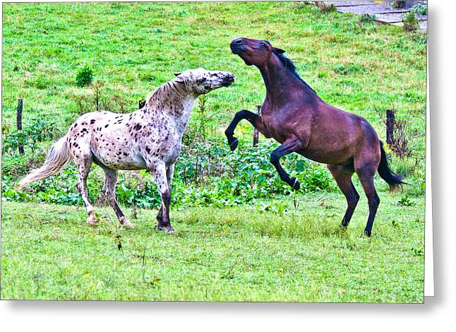 Green Pasture Greeting Cards - After Working Greeting Card by Betsy C  Knapp