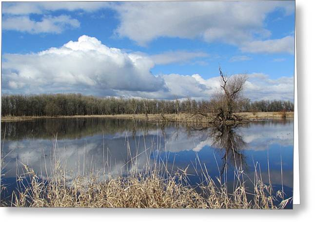 Wildlife Refuge. Greeting Cards - Afternoon Delight Greeting Card by Angie Vogel