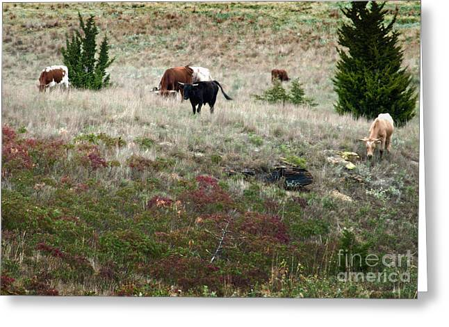 Cattle Drive Photographs Greeting Cards - Afternoon Graze Greeting Card by Fred Lassmann