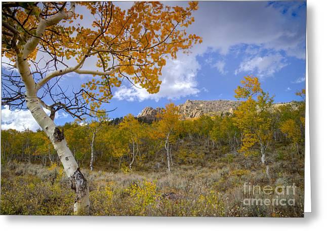 White Knob Mountains Greeting Cards - Afternoon in the Mountains Greeting Card by Idaho Scenic Images Linda Lantzy