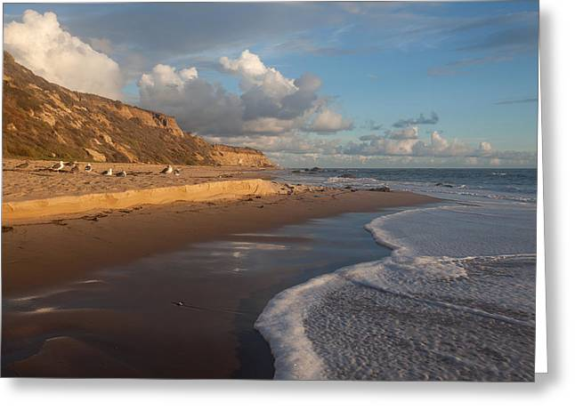 Sandstone Bluffs Greeting Cards - Afternoon Light  Crystal Cove State Beach Greeting Card by Cliff Wassmann