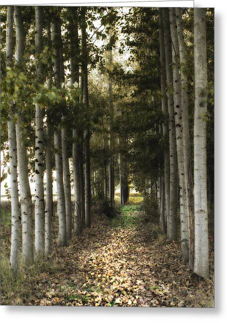 Birch Trees Greeting Cards - Afternoon Stroll Greeting Card by Rebecca Cozart