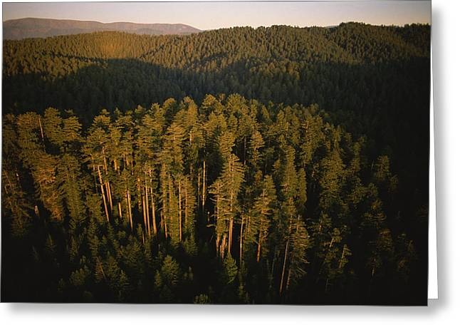 Afternoon Sunlight Bathes Redwood Trees Greeting Card by James P. Blair