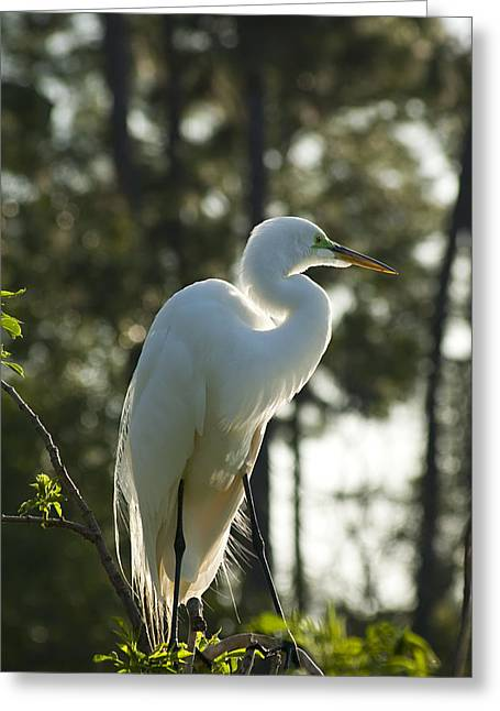 Nature Nesting Greeting Cards - Afternoon View Greeting Card by Carolyn Marshall