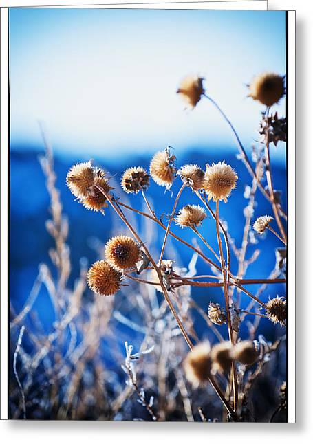 Against The  Blue Sky Greeting Card by Lisa  Spencer