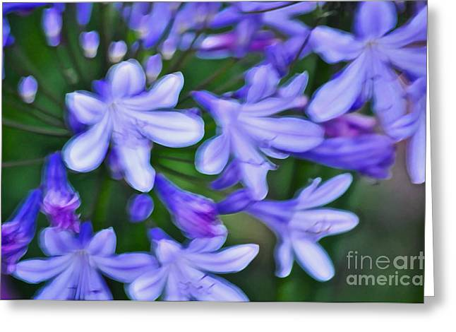 Agapanthus Greeting Cards - Agapanthus Greeting Card by Gwyn Newcombe