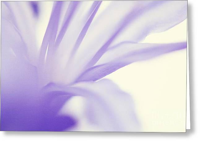 Agapanthus Greeting Cards - Agapanthus Greeting Card by Kim Fearheiley