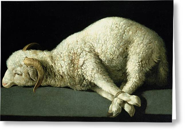 Legs Greeting Cards - Agnus Dei Greeting Card by Francisco de Zurbaran