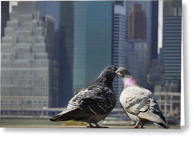 Bird Scape Greeting Cards - Ahh to be young and in love in the city Greeting Card by Vicki Jauron