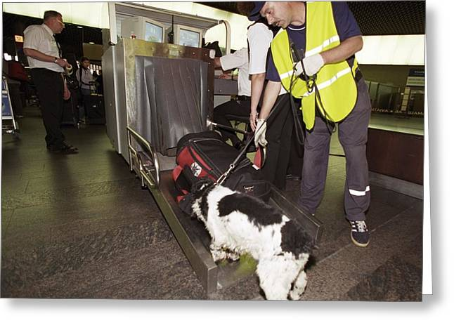 Guard Dog Greeting Cards - Airport Security, Explosives Detection Greeting Card by Ria Novosti
