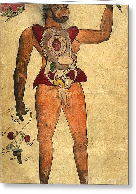 Persian Illustration Greeting Cards - Akbars Medicine, Persian Anatomical Man Greeting Card by Science Source