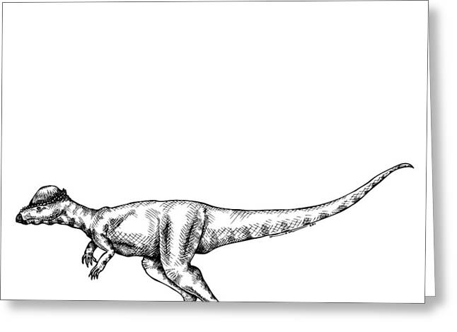 Imagination Drawings Greeting Cards - Alaskacephale Dinosaur Greeting Card by Karl Addison