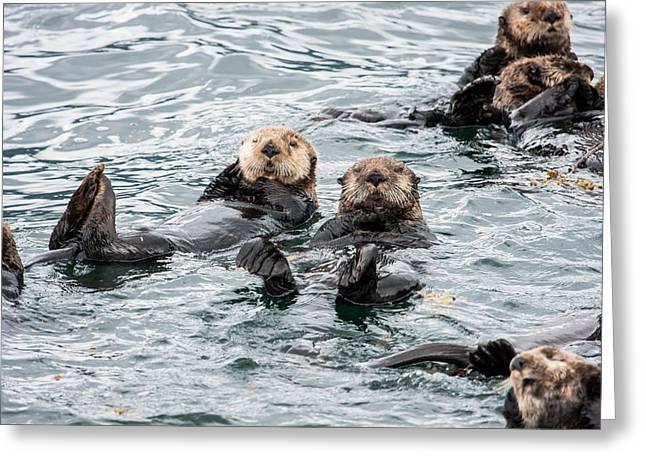 Alaskan Sea Otters Greeting Card by Josh Whalen