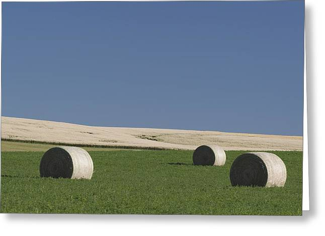 Bale Greeting Cards - Alberta, Canada Hay Bales In A Green Greeting Card by Michael Interisano