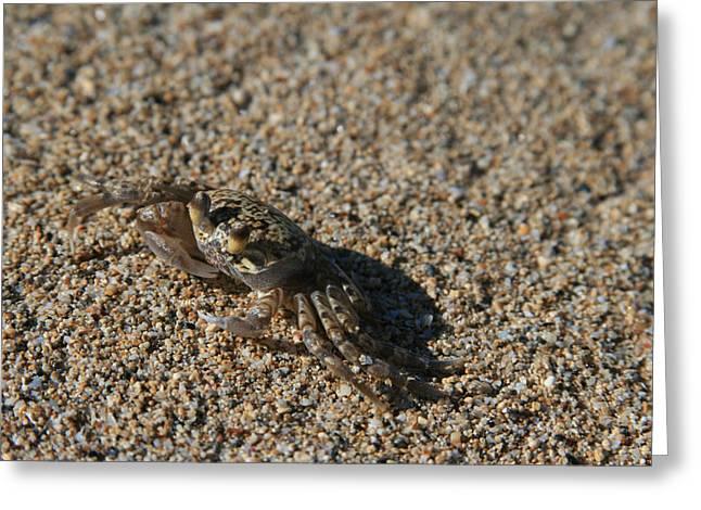Ourjrny Greeting Cards - Ale eke Ohiki Kuau Sand Crab Greeting Card by Sharon Mau