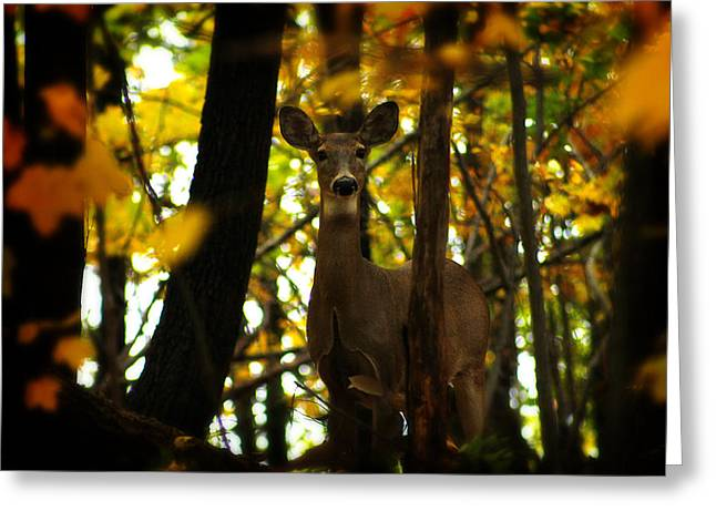 Alert Doe Greeting Card by Scott Hovind