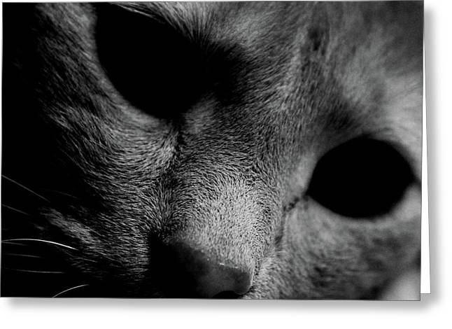 Abstract Digital Photographs Greeting Cards - Alfie Two Greeting Card by Jerry Cordeiro