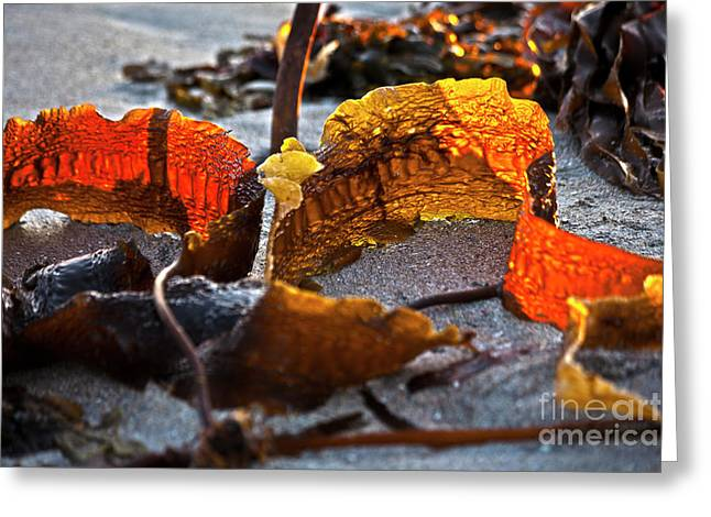 Best Sellers -  - Tidal Photographs Greeting Cards - Algae at low tide Greeting Card by Heiko Koehrer-Wagner