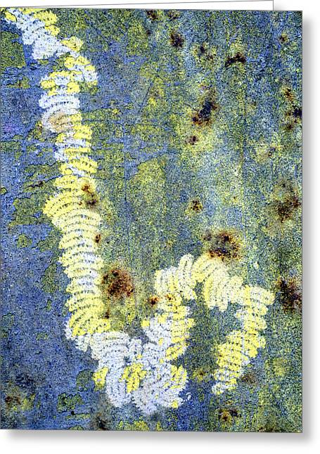 Partly Eaten Greeting Cards - Algae Greeting Card by Dr Keith Wheeler