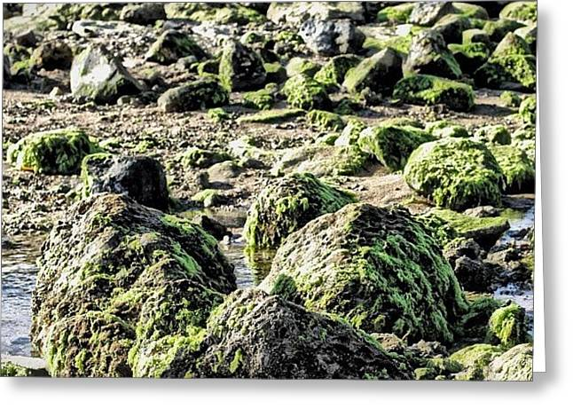 Algae Rocks Greeting Card by Arya Swadharma