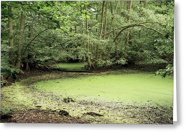 Aquatic Bacteria Greeting Cards - Algal Bloom In Pond Greeting Card by Michael Marten