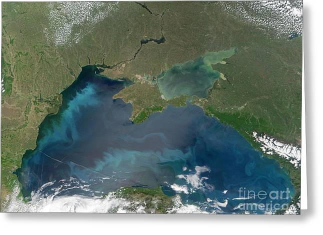 Algal Greeting Cards - Algal Blooms In The Black Sea Greeting Card by NASA / Science Source