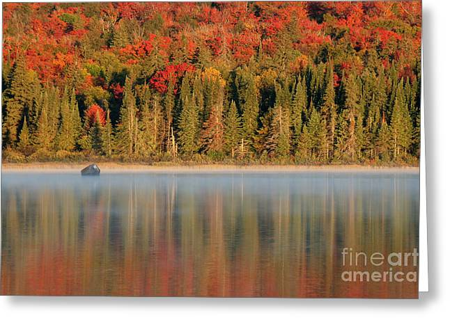 Shiny Leaves Greeting Cards - Algonquin Reflections Greeting Card by Chris Hill