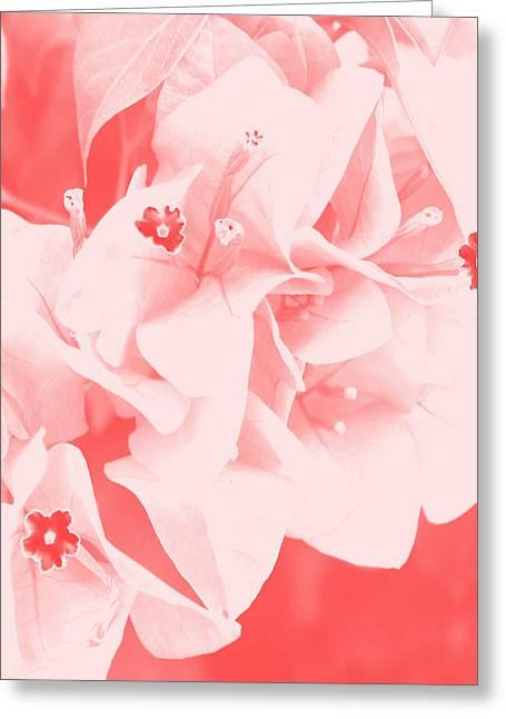 Keren Shiker Greeting Cards - Ali Greeting Card by Keren Shiker