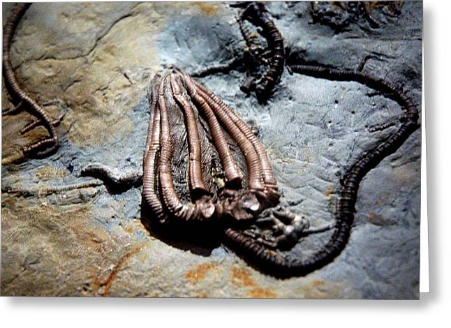 National Past Time Greeting Cards - Alien Fossil   Greeting Card by LeeAnn McLaneGoetz McLaneGoetzStudioLLCcom